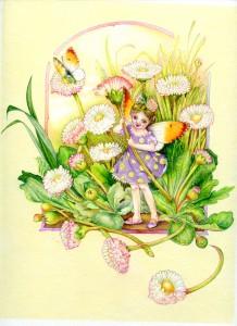 Daisy Fairy © Myrea Pettit